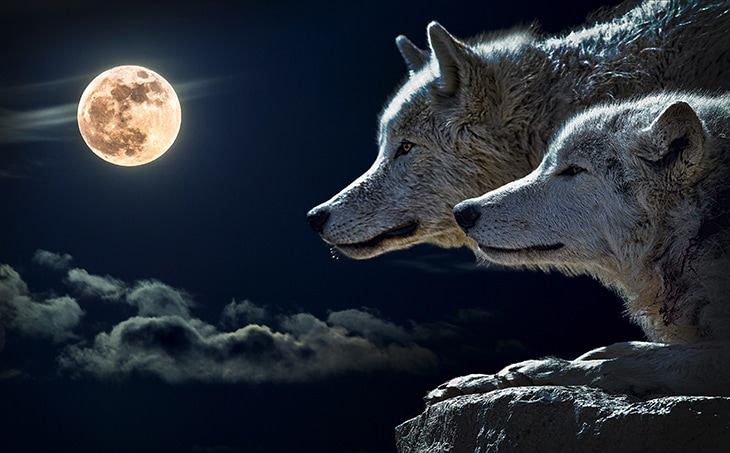 Paranormal picks: Our 11 all-time favorite wolf shifters